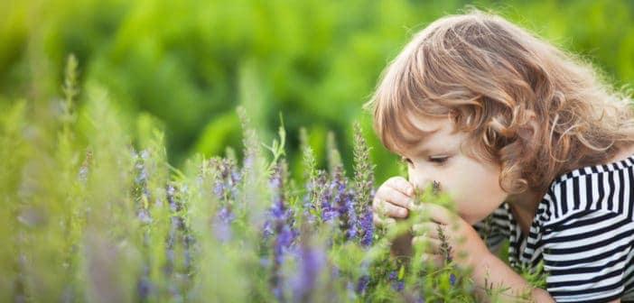 Поленова алергия: Какво е добре да знаете?