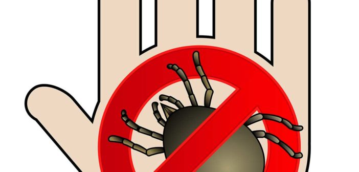 Алергия към акари – изпитани методи за превенция
