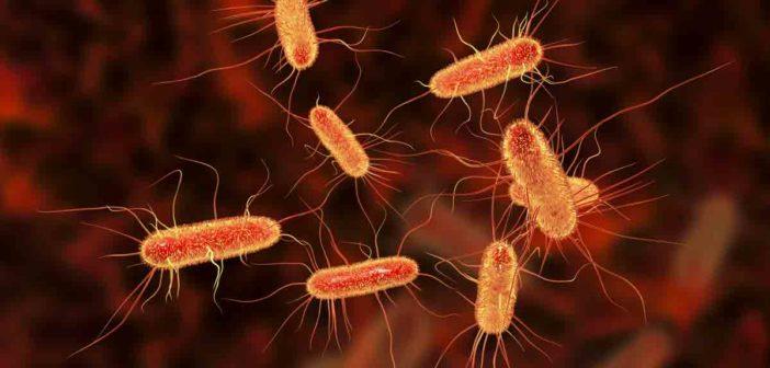 Пиелонефрит – една от най-упоритите уринарни инфекции